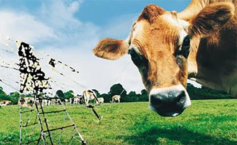 OPECST - ondes électromagnétiques et santé animale